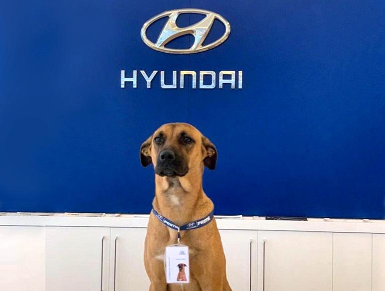 Tuscon Prime mascota oficial de Hyundai Prime
